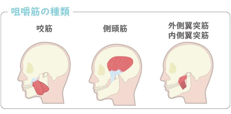4種類の咀嚼筋
